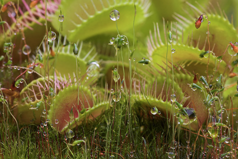 alma das plantas